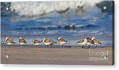Acrylic Print featuring the photograph Sleepy Shorebirds by Michelle Wiarda