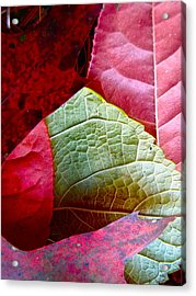 Slices Of Fall Acrylic Print