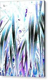 Slink Acrylic Print
