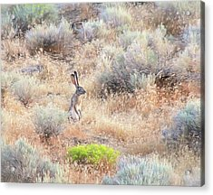 Acrylic Print featuring the photograph Slip Out The Back Jack by Donna Kennedy