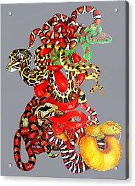 Slither Acrylic Print