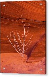 Slot Canyon Sentinel Acrylic Print