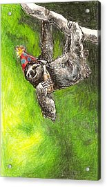Sloth Birthday Party Acrylic Print by Steve Asbell