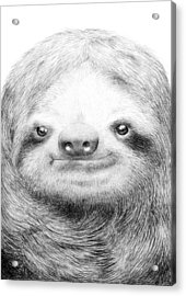 Sloth Acrylic Print by Eric Fan