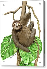 Acrylic Print featuring the mixed media Hanging Three Toe Sloth  by Thomas J Herring