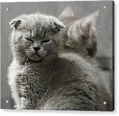 Slumbering Cat Acrylic Print