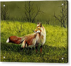 Sly Fox Acrylic Print by Don Griffiths