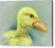 Sly Little Duckling Acrylic Print