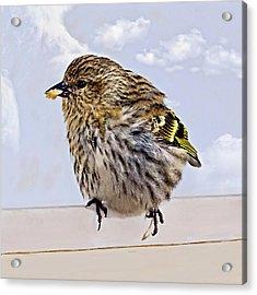 Small Bird Eating Seed Acrylic Print by Susan Leggett
