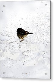 Small Bird On Snow Acrylic Print