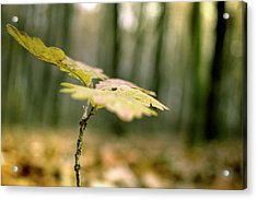 Small Branch With Yellow Leafs Close-up Acrylic Print