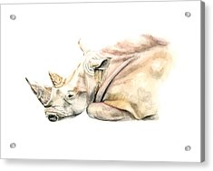 Small Colour Rhino Acrylic Print by Elizabeth Lock