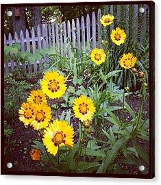 Small Yellow Daisies Acrylic Print