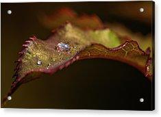 Small Diamonds Acrylic Print