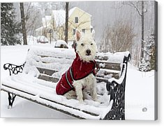 Small Dog Park Bench Snow Storm Acrylic Print
