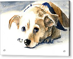 Small Dog With Tan Short Hair  Acrylic Print
