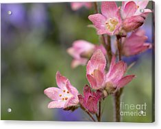 Small Flowers Acrylic Print