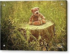 Small Little Bears On Old Wooden Stump  Acrylic Print by Sandra Cunningham