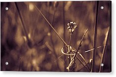 Acrylic Print featuring the photograph Small by Lora Lee Chapman
