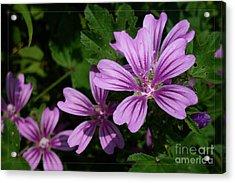 Small Mauve Flowers 6 Acrylic Print