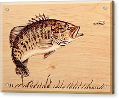 Acrylic Print featuring the pyrography Small Mouth Bass by Ron Haist