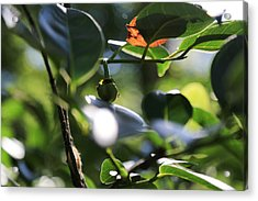 Small Nature's Beauty Acrylic Print by Christopher L Thomley