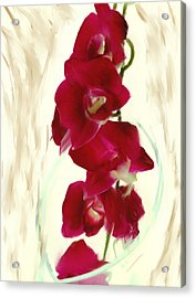 Small Red Lilies Acrylic Print by Daniel D Miller