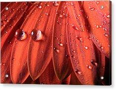 Small Water Drops Acrylic Print
