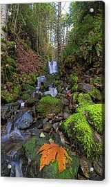 Small Waterfall At Lower Lewis River Falls Acrylic Print by David Gn