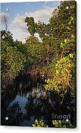 Small Waterway In Vitolo Preserve, Hutchinson Isl  -29151 Acrylic Print by John Bald