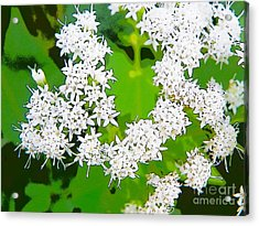 Small White Flowers Acrylic Print
