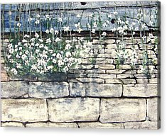 Small White Flowers Acrylic Print by Terence John Cleary