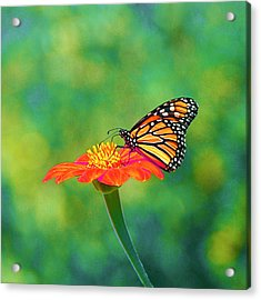 Acrylic Print featuring the photograph Small Wonders by Byron Varvarigos