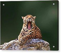 Smile Acrylic Print by Ivan Vukelic