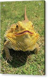 Smiling Bearded Dragon  Acrylic Print by Susan Leggett