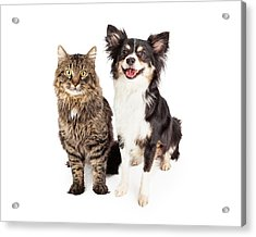 Smiling Chihuahua Mixed Breed Dog And Cat Together Acrylic Print