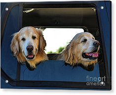 Smiling Dogs Acrylic Print