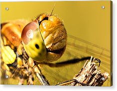Smiling Dragonfly Acrylic Print