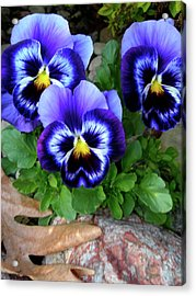 Smiling Faces Of Spring Acrylic Print