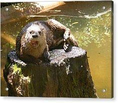 Smiling Otter Acrylic Print by Elena Tudor