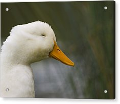 Smiling Pekin Duck Acrylic Print by Tara Lynn