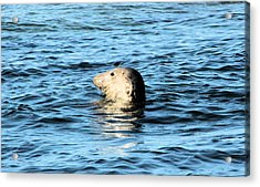 Smiling Sea Acrylic Print by Tin Lid Photography
