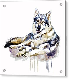 Smiling Wolf Acrylic Print by Marian Voicu