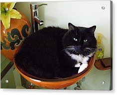 Acrylic Print featuring the photograph Smokey In Wash Bowl by Jeanette Oberholtzer