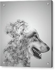 Smokey Wolf Acrylic Print
