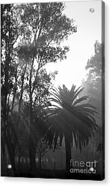 Smoky Morning Trees Acrylic Print