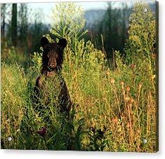 Smoky Mountain Staredown Acrylic Print by Doug McPherson