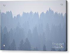 Smoky Pines Acrylic Print