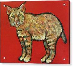 Smug Bobcat Acrylic Print by Carol Suzanne Niebuhr