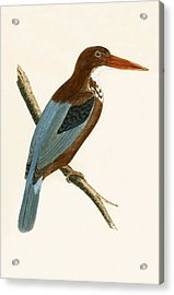 Smyrna Kingfisher Acrylic Print by English School